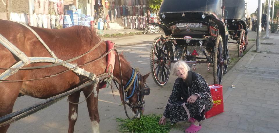 Barbara füttert Lasttiere in Ägypten
